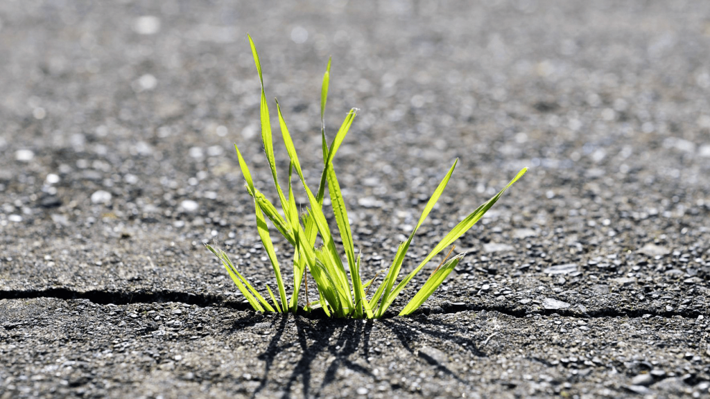 This is a picture of grass growing in pavement.