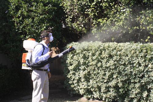 mosquito-fogging-4