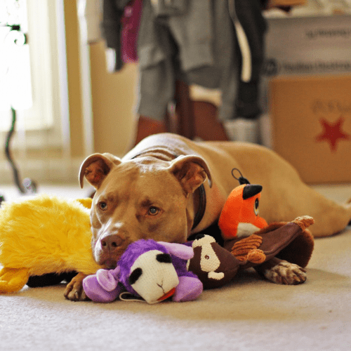 This is a picture of Olive Shiplett with her toys
