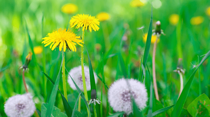 Top 5 Reasons I Have Weeds In My Lawn