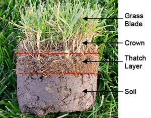 This is an image that shows all the different parts of turf