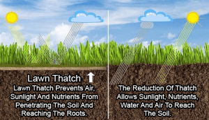 This is a diagram that shows how thatch does not prevents water, nutrients and air into the soil.