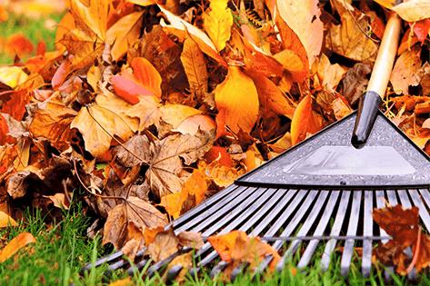 Fall Lawn Tips